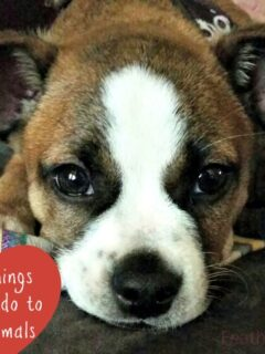 6 Easy Things You Can Do to Help Animals