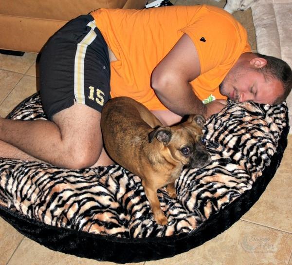 Luxury Pet Bed from Baylee Nasco