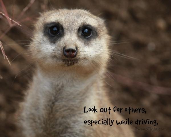 Safe Driving Catchphrase Contest #DecideToDrive