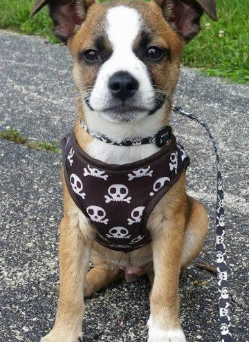 Meet our First Foster Puppy