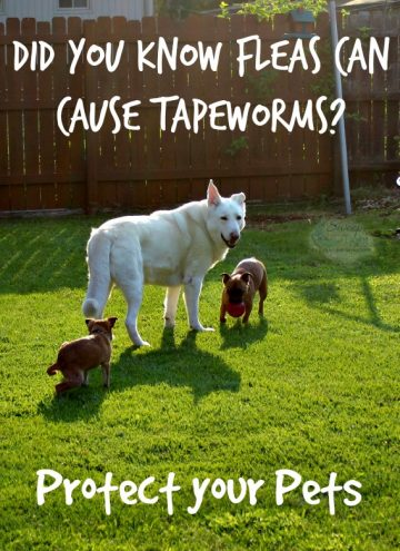 Tapeworm and Other Gross Things That Affect Your Dog
