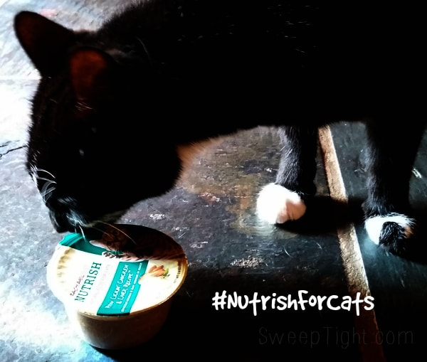 My cat LOVES his new food #NutrishforCats #sponsored #MC