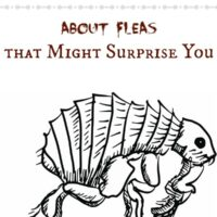 4 Facts about Fleas that Might Surprise You #Seresto