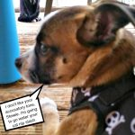 14 Strange Places Our Puppy Has Peed