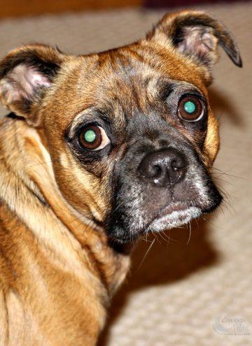 Gluten-Free Dog Nutrition