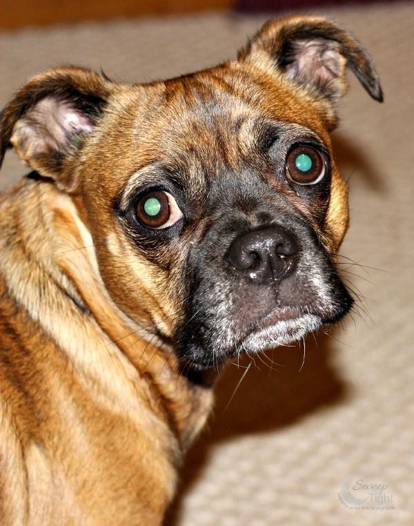 Gluten-Free Dog Nutrition #WholeBodyHealth