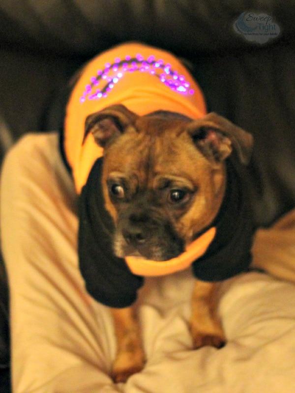 Light up pumpkin pet costume