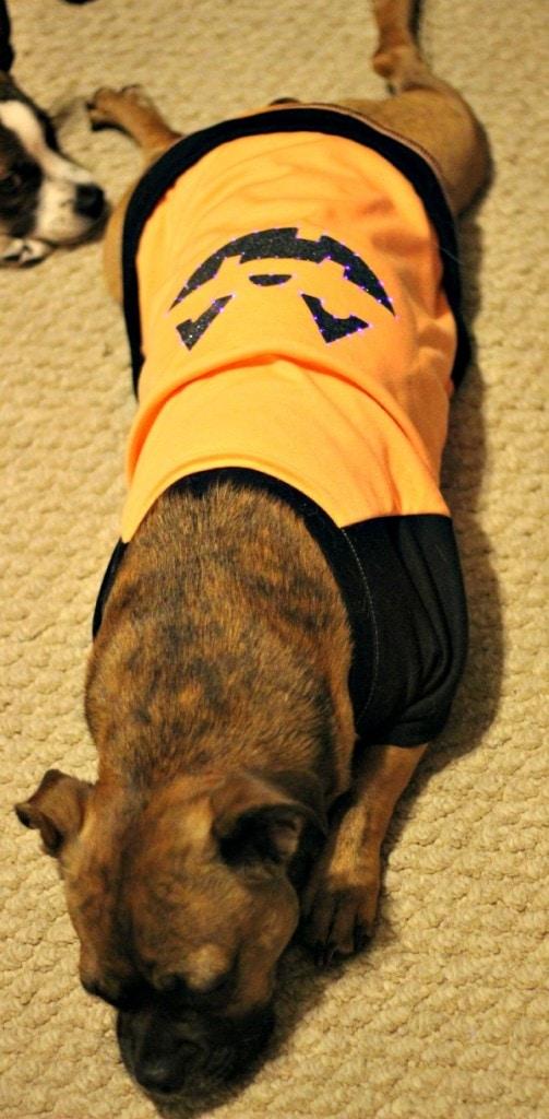 The Grumpkin Pumpkin Costume