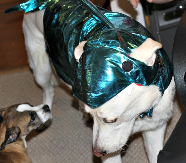 Great White Shepherd Shark Costume