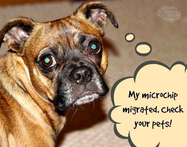Watch out for Migrating Chips in your Pets