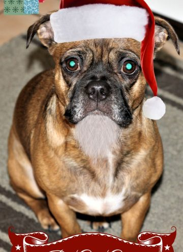 Pet Gift Ideas that Help with Puppy Problems