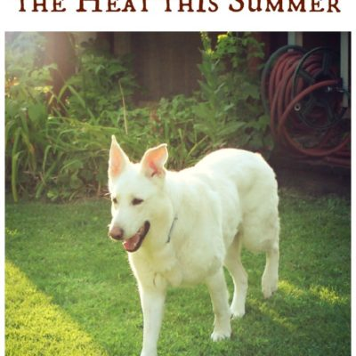 4 Ways to Help Your Dog Beat the Heat this Summer