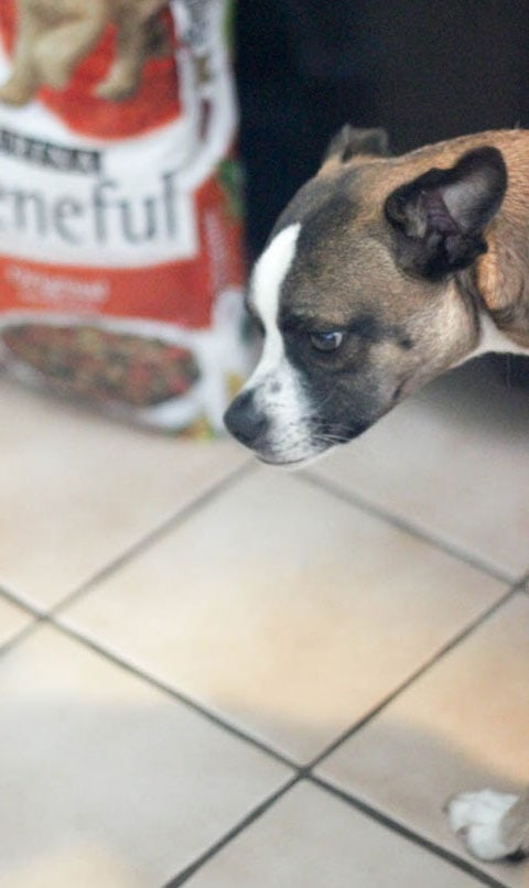 Purina Products and Easy Shopping with Dollar General