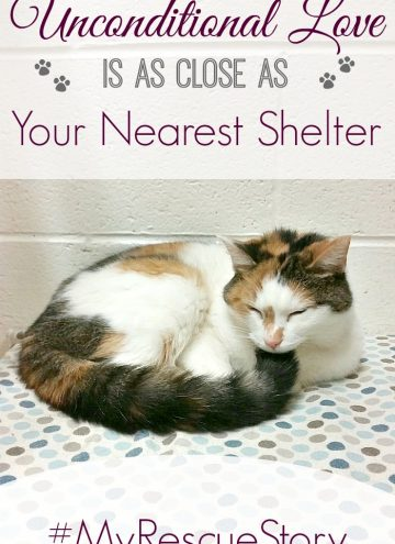 """Purina Cat Chow """"Building Better Lives Adoption Drive"""""""