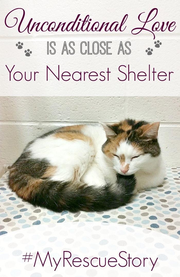 Cat Rescue Quote #MyRescueStory