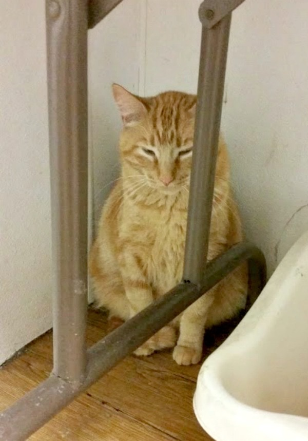 Shelter Cats Come in All Personalities #MyRescueStory This is Kindle