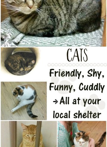 Shelter Cats Come in All Personalities