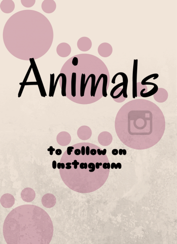 Animal Instagram Accounts to Follow