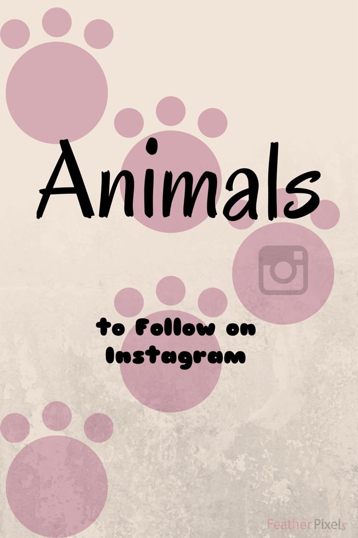 Animal Instagram Accounts to Follow