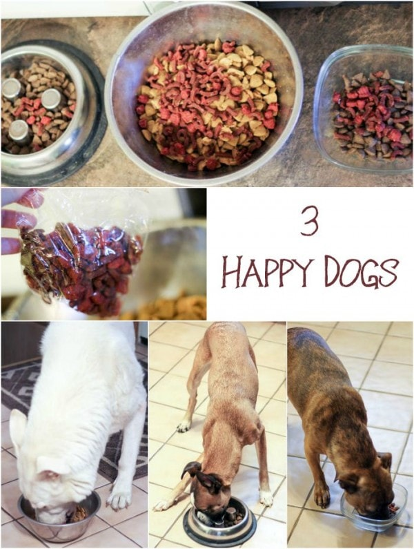 5 Feeding Time Tips for Homes with Multiple Dogs