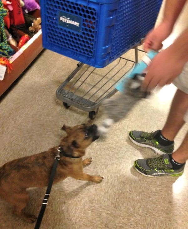 Grump's First Trip to PetSmart for Dog Food