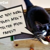 Protect your cat and family from rabies. #VaxYourCat #sponsored