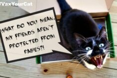 Let's End Rabies Together – Get Your Cat Vaccinated