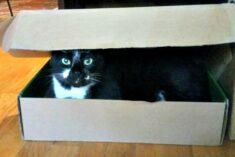 Funny cat in a box