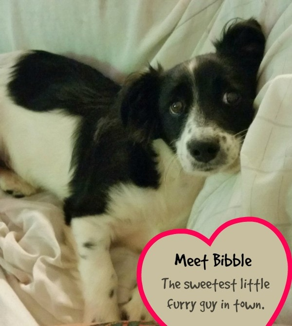 Bibble is the best!