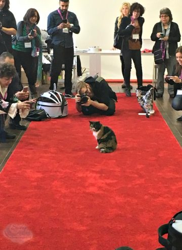 Purina Better With Pets Summit Highlights