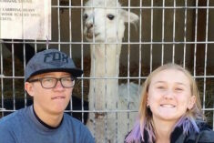 We love alpacas! Check out SOL ALPACA's new online store! #SolAlpaca #FeelWarmer ad