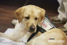 Veteran Service Dogs – 5 Things to Know