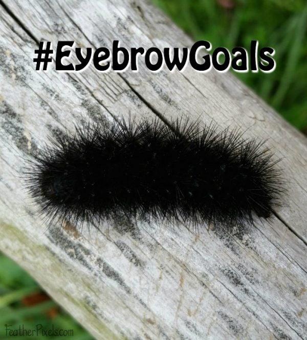 Bold eyebrows end up like bushy caterpillars