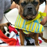 10 Summer Safety Tips for Dogs that you Need to Know