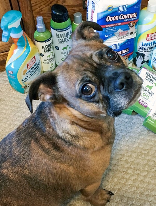 Ideal Pet Products to Stock Up On for Pets of All Ages
