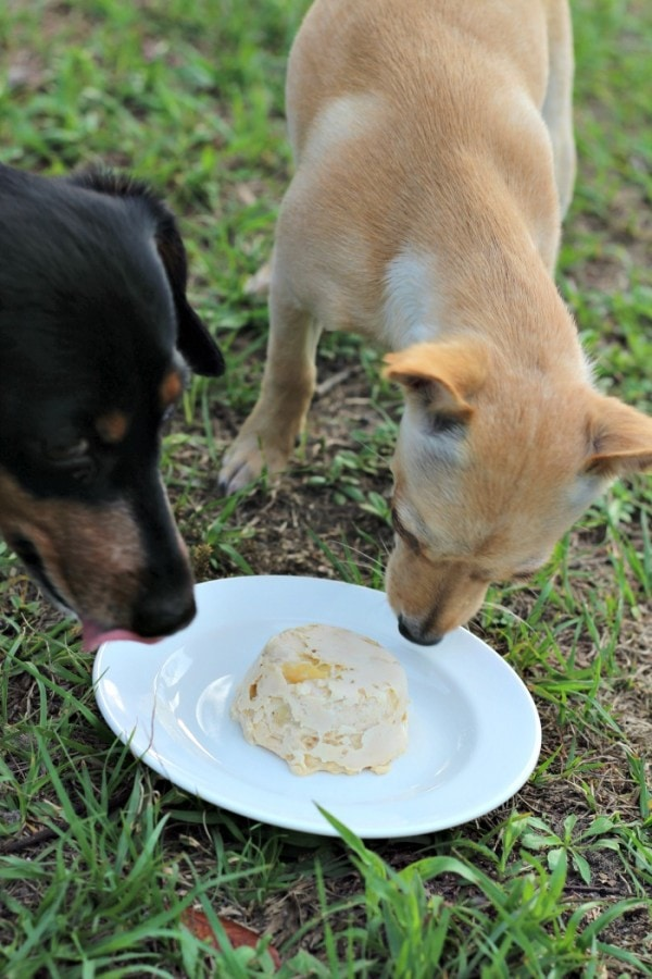Frozen Banana and Peanut Butter Dog Treat Recipe