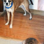 4 Tips on How to Help with Anxiety in Dogs