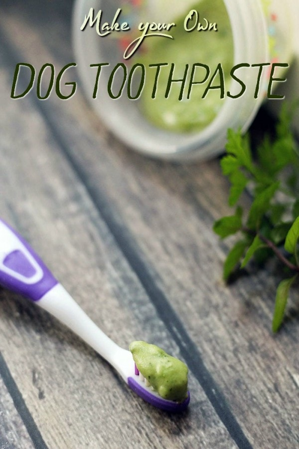 Minty Fresh Homemade Dog Toothpaste