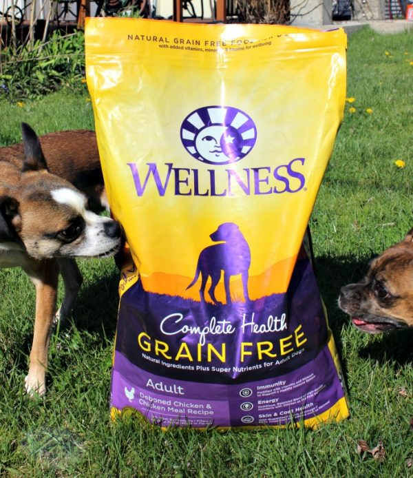 Wellness Grain Free Dog Food for a More Playful Grump #GrainFreeForMe