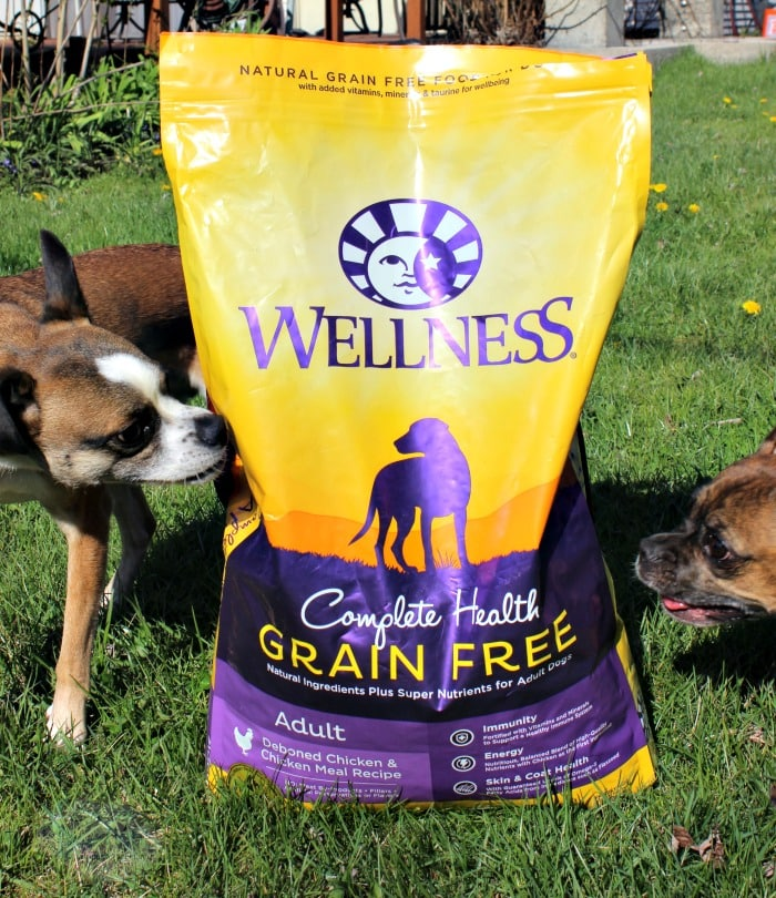 Wellness Grain Free Dog Food for a More Playful Grump #GrainFreeForMe