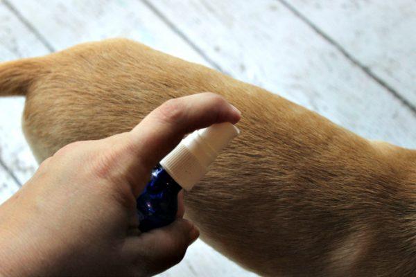 How to Make Flea and Tick Spray for Pets