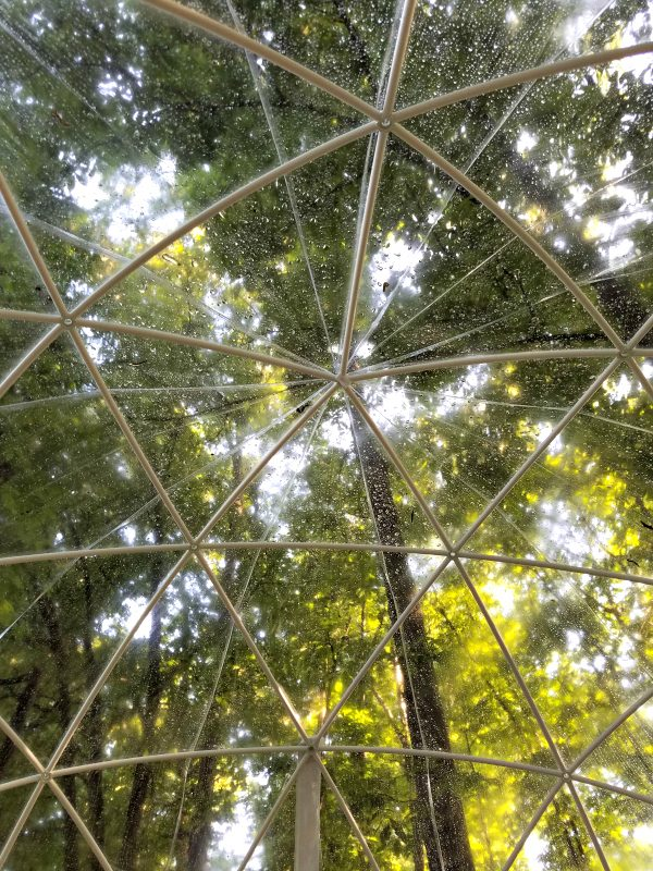 View from the floor of our Garden Igloo