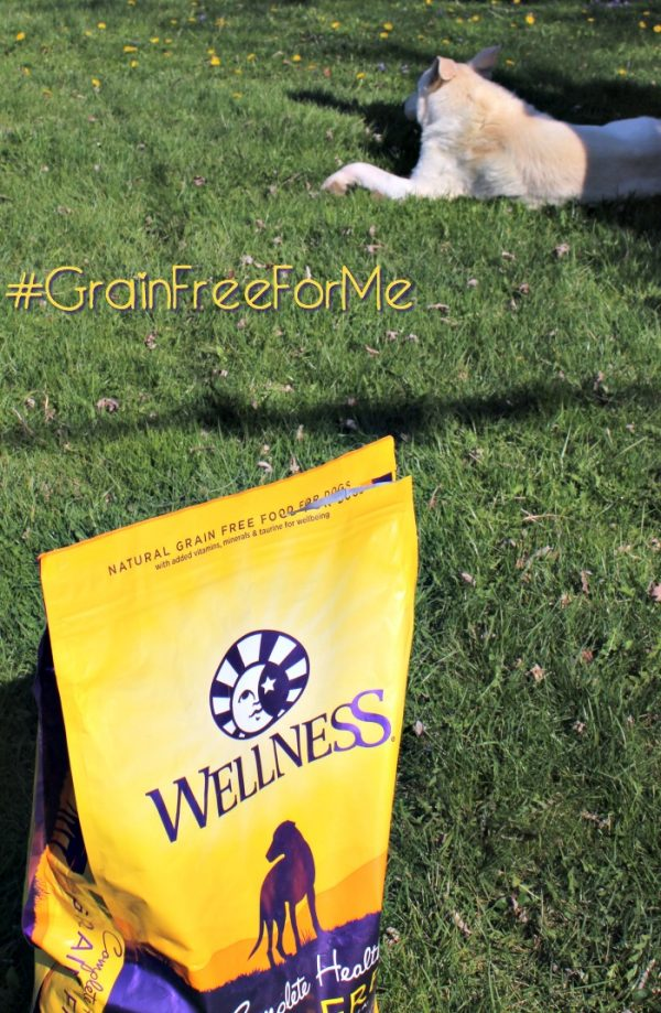 Grain Free Dry Dog Food is at PetSmart #GrainFreeForMe