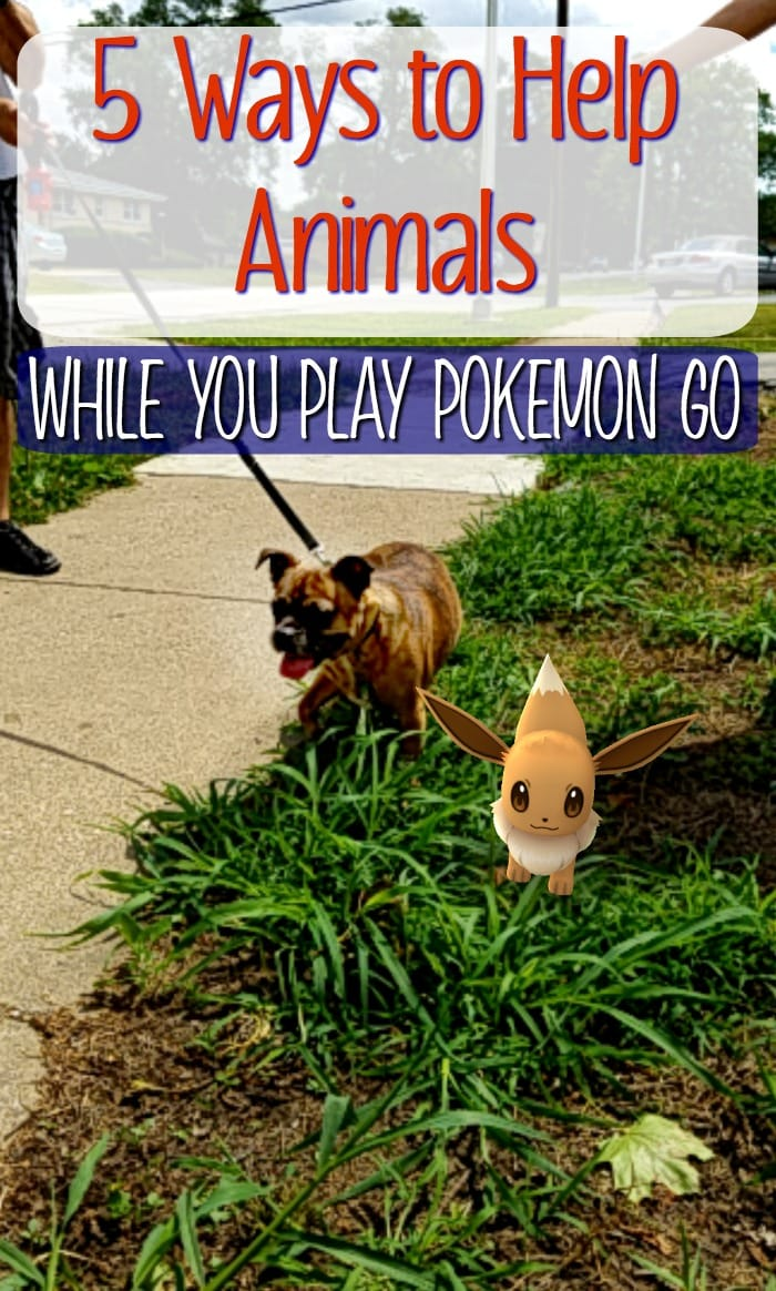 Help Animals in Pet Shelters while you Pokemon GO