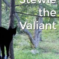 The Many Titles of Stewie - our cat rescue story #CatChowCares #ad