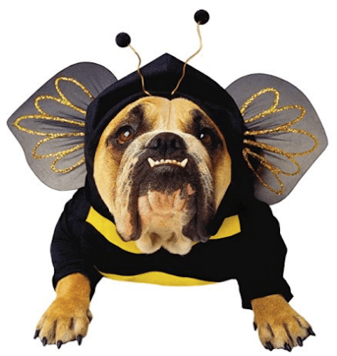 Bumblebee Dog Costume