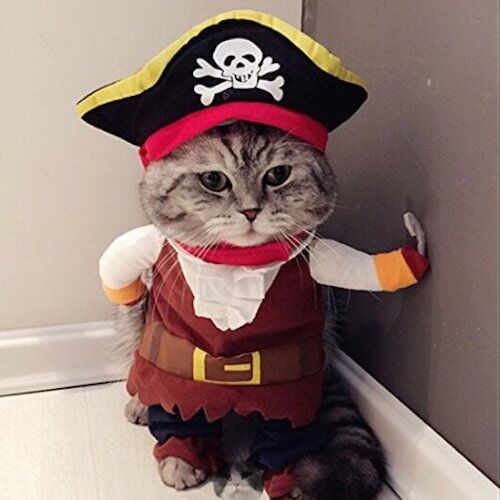 Caribbean Pirate Cat Costume