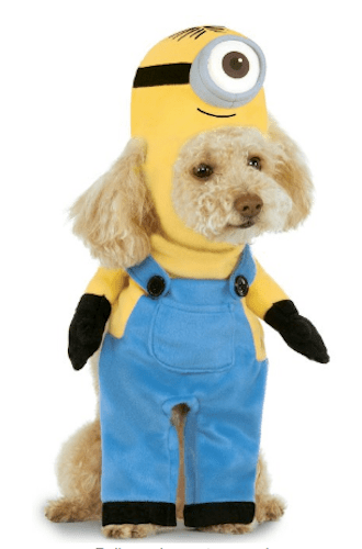 Minion Stuart Pet Suit