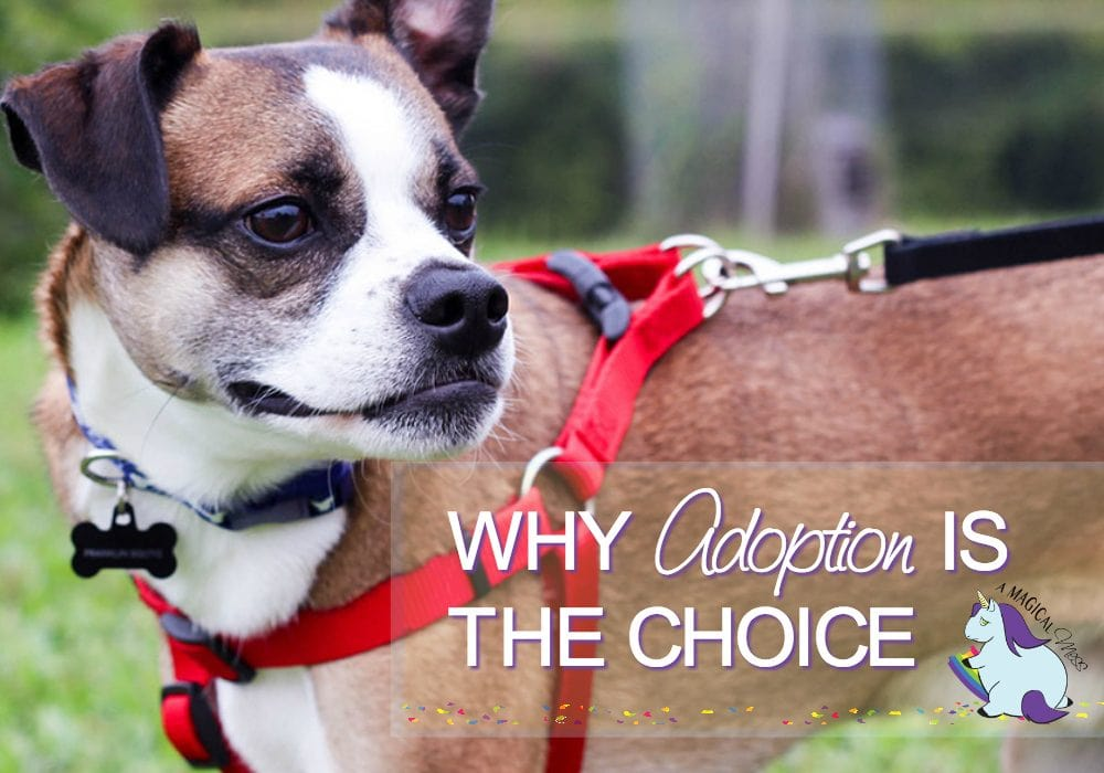 7 Reasons to Choose Pet Adoption Online Sites