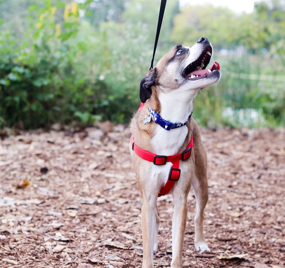 7 Reasons to Choose Pet Adoption Online Sites - Happy Franklin